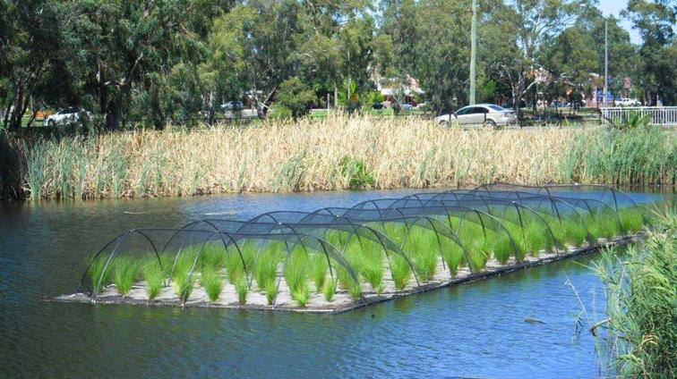 Floating wetlands floating islands aqua biofilter for Pond biofilter design