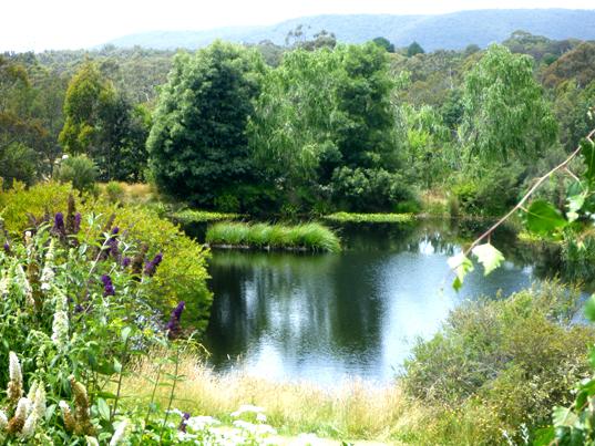 Floating wetlands floating islands aqua biofilter for Design of maturation pond