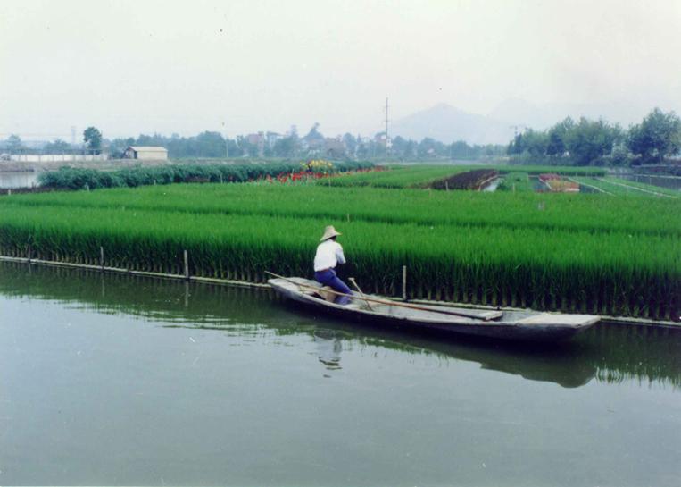 Floating wetlands floating islands aqua biofilter for Floating fish pond