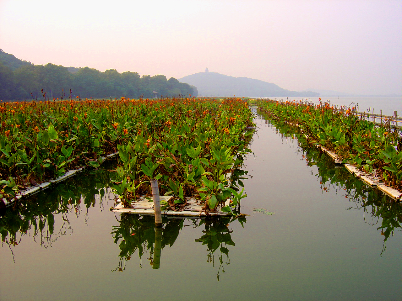 Floating-wetlands-China