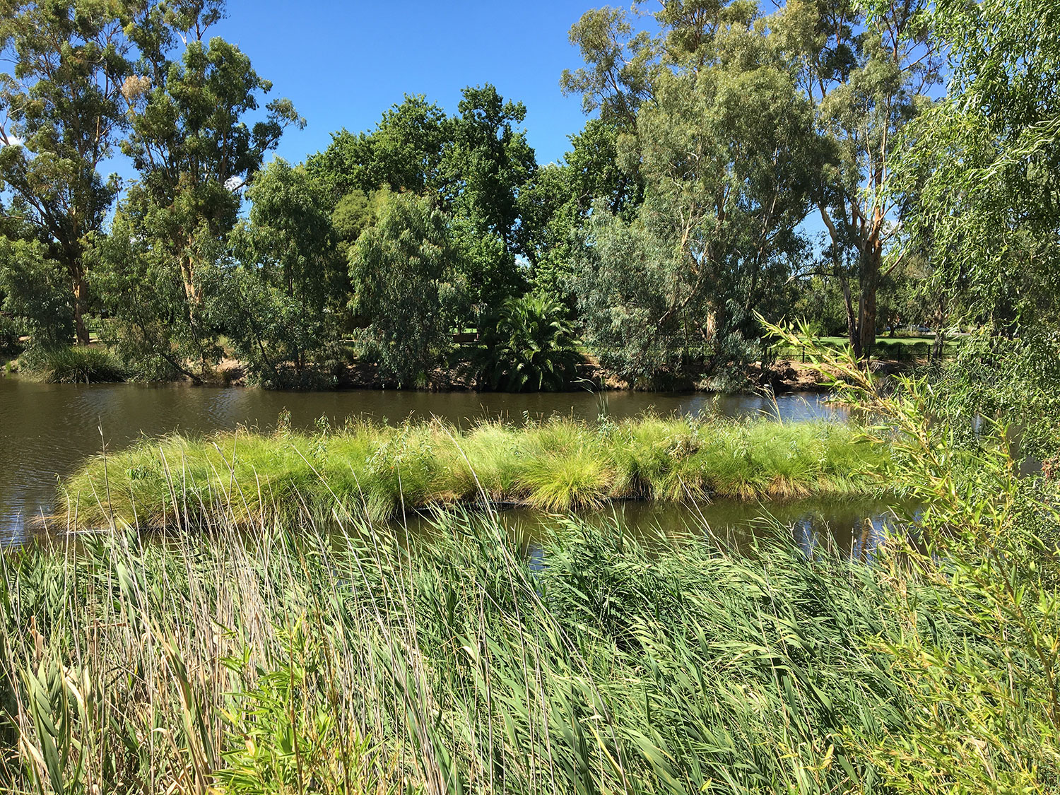 AquaBiofilter Floating Wetlands Floating Islands Floating Reed Beds Wagga 1